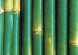 Bamboe wand- en plafondbekleding