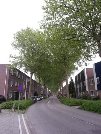 Plataan_Biodiversiteit in steden_Opinie_Astrid de Wilde