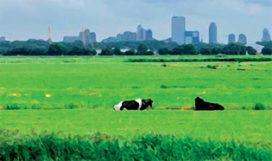 Nationale Federatie Stadsgerichte Landbouw in de maak