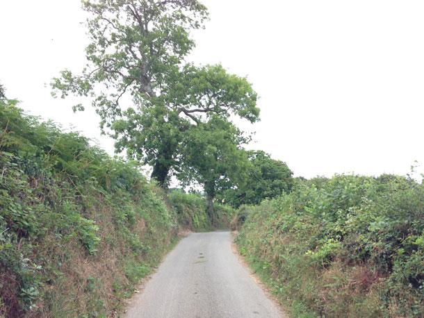 Van Eig - Detail Opninie Hedge