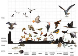 Biodiversiteit in steden hard nodig