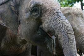 Emmen geeft extra steun aan dierenpark