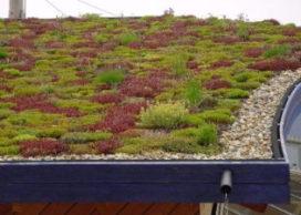 Rotterdam investeert verder in groene daken