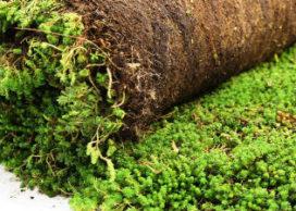 Duurzaam groendak komt steeds meer in beeld