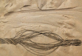 Agendatip: Sand Drift – zandmotor als cultureel fenomeen
