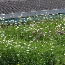 Lichte grasdaktuin Summer Meadow blijft vanzelf groen