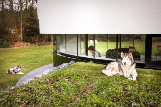 123dv 360 villa7 exterior eyecontact dogs kitchen 560x373