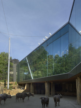 Studio farris architects antwerp zoo ph 004 aviary photo toon grobet lr 1440px 315x420