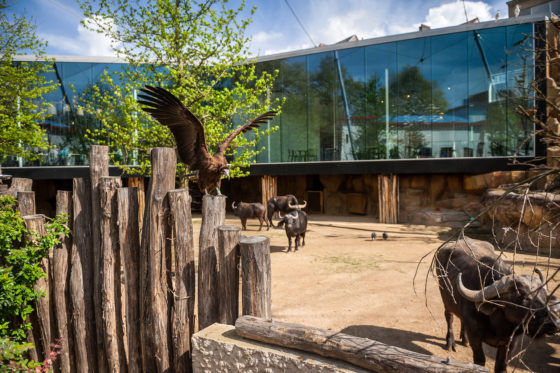 Studio farris architects antwerp zoo ph 005 aviary photo jonas verhulst lr 1440px 560x373